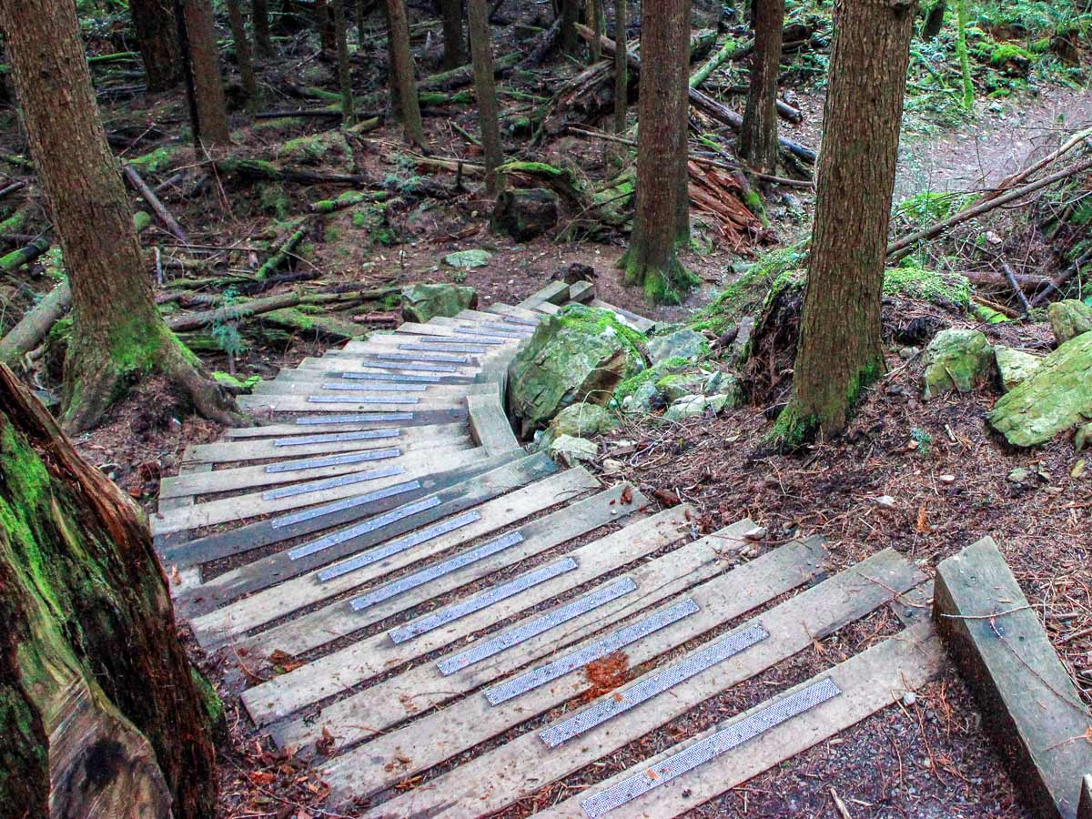 Staires in the forest along Jug Island hiking trail near Vancouver
