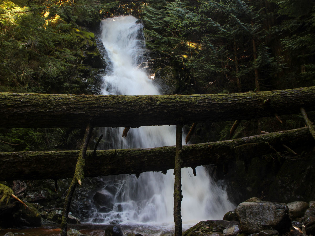 Fallen trees in forest across Sawblade Falls waterfalls near Vancouver