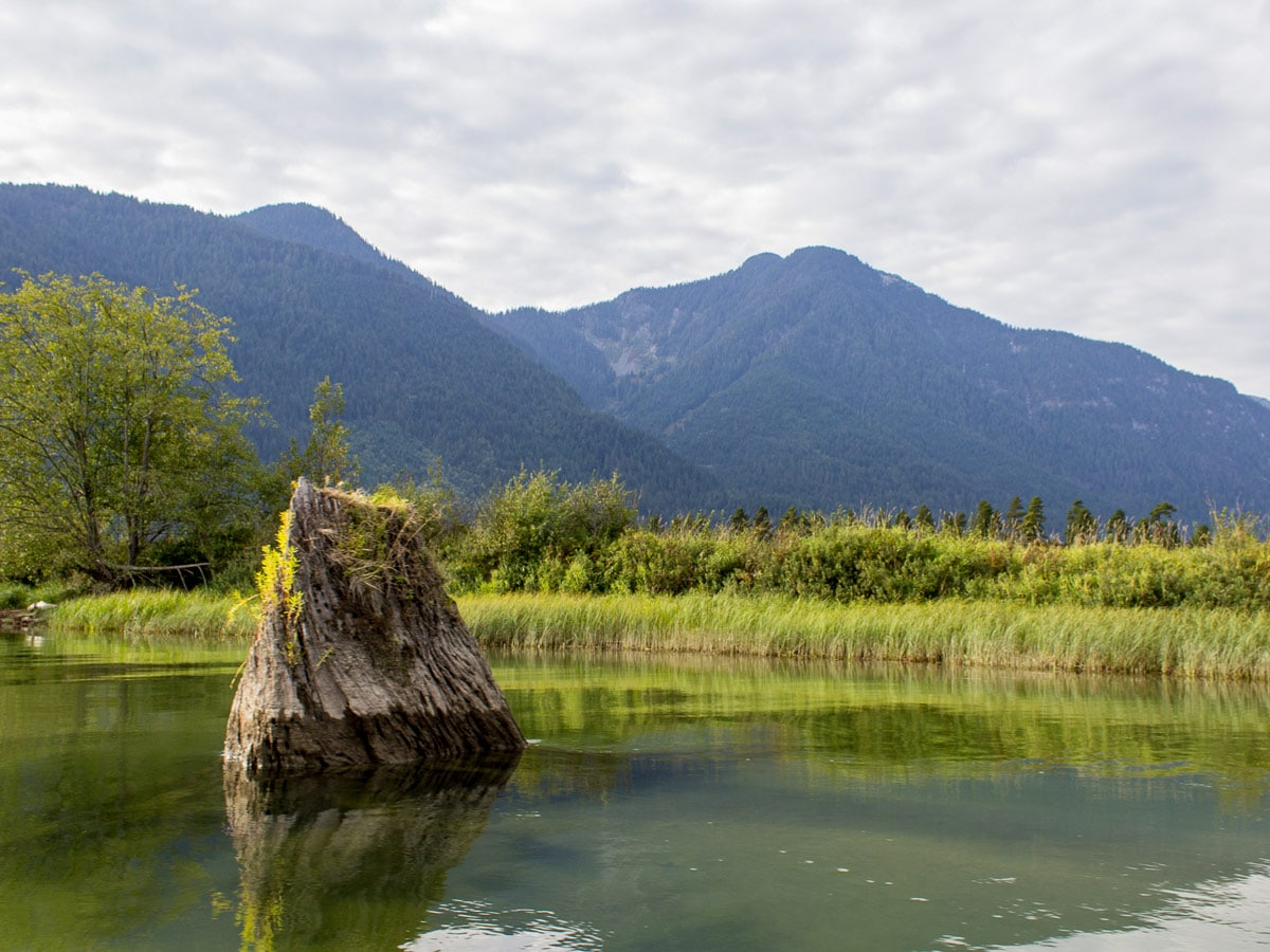 Pond alongside the hiking trail to Widgeon Falls near Vancouver BC