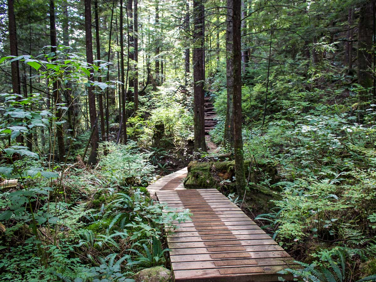 Widgeon Falls hiking trail boardwalk through the forest east of Vancouver