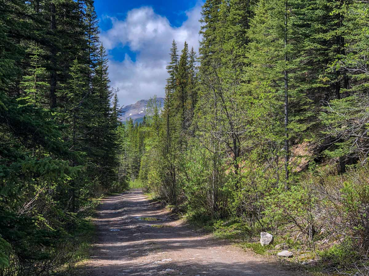 Hiking through Canadian forest Little Elbow trail Kananaskis Alberta Canada
