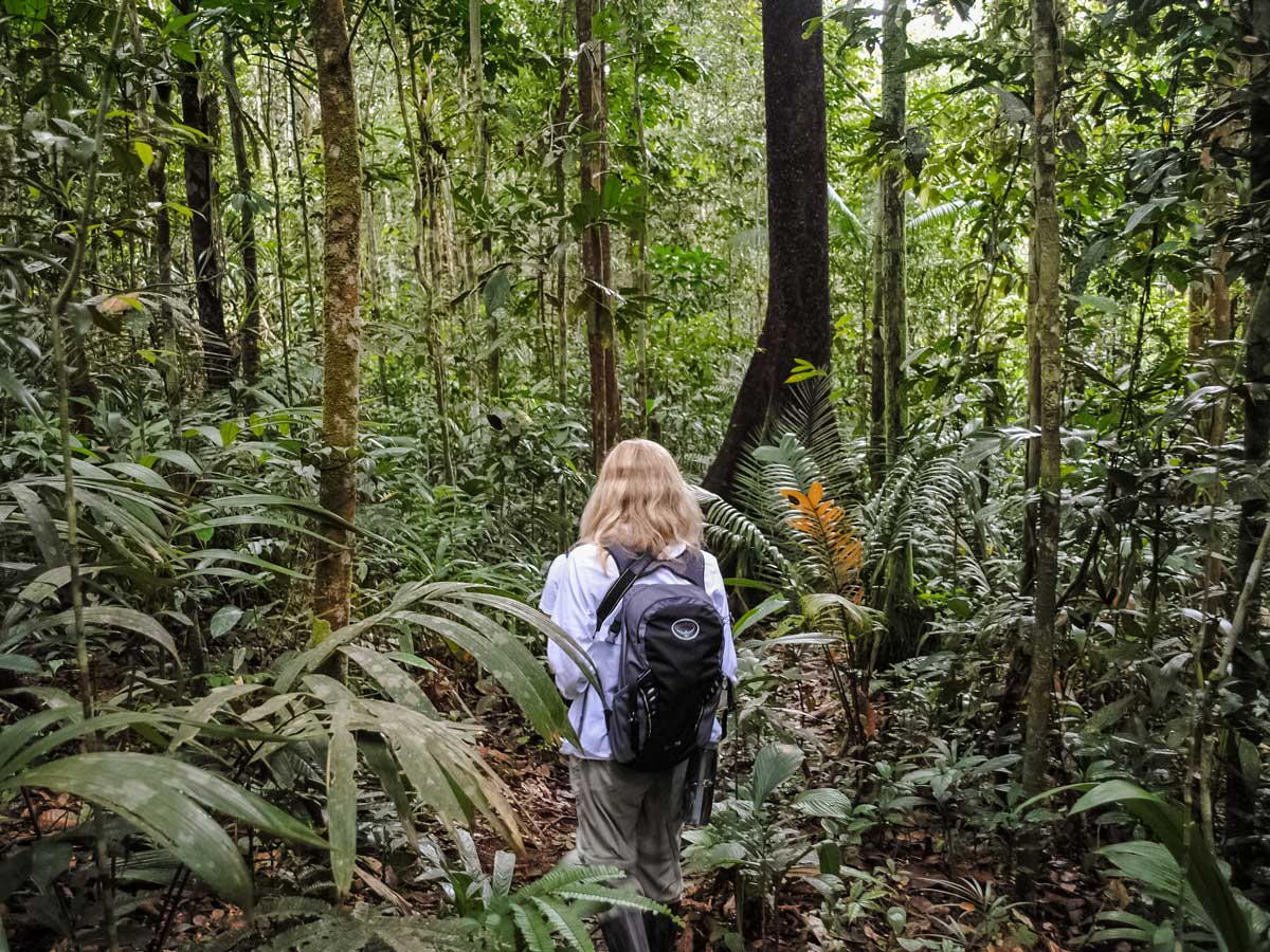 Trekking into the Rainforest Amazonia research Peru