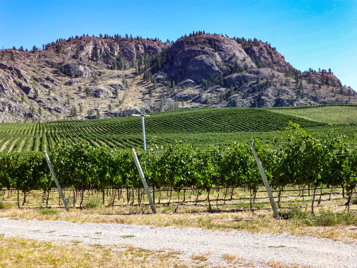 Okanagan wine country vineyards near Kelowna British Columbia Canada
