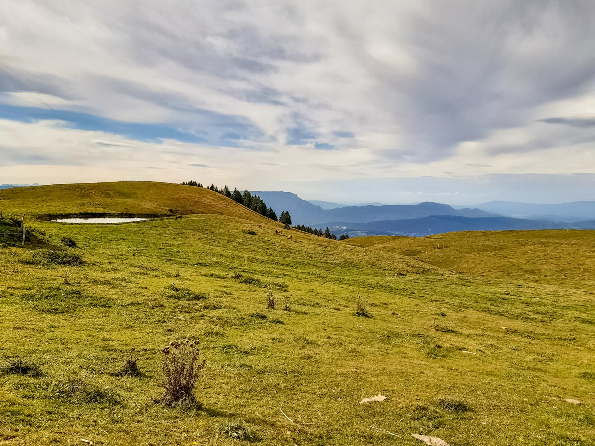 Cow pasture and lake along Semnoz hike in France
