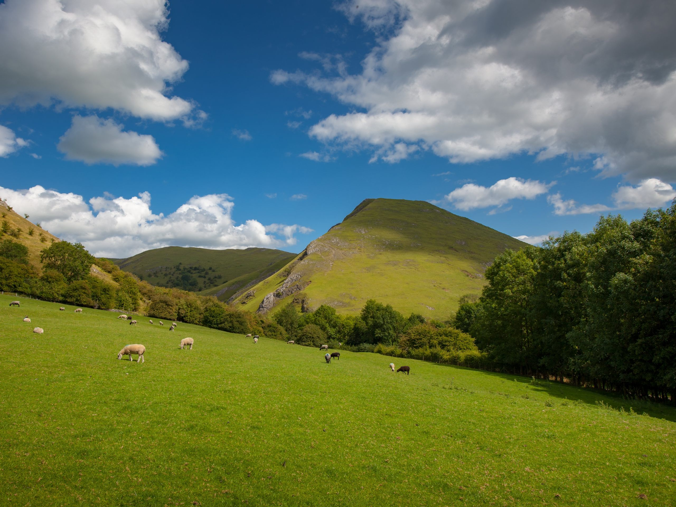 Sheep grazing in front of Thorpe Cloud