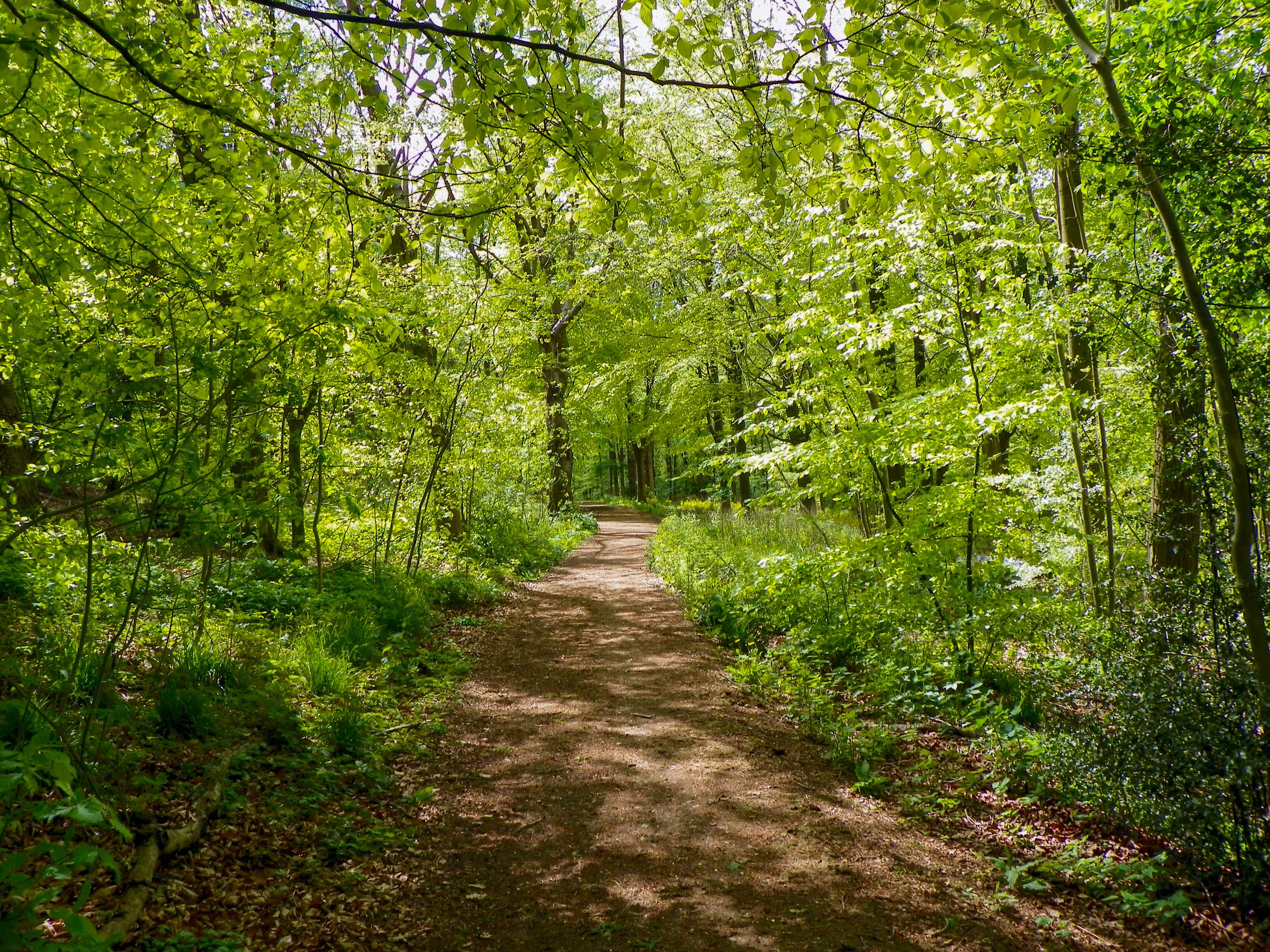 Chiltern Hills Valleys and Woodlands forest path