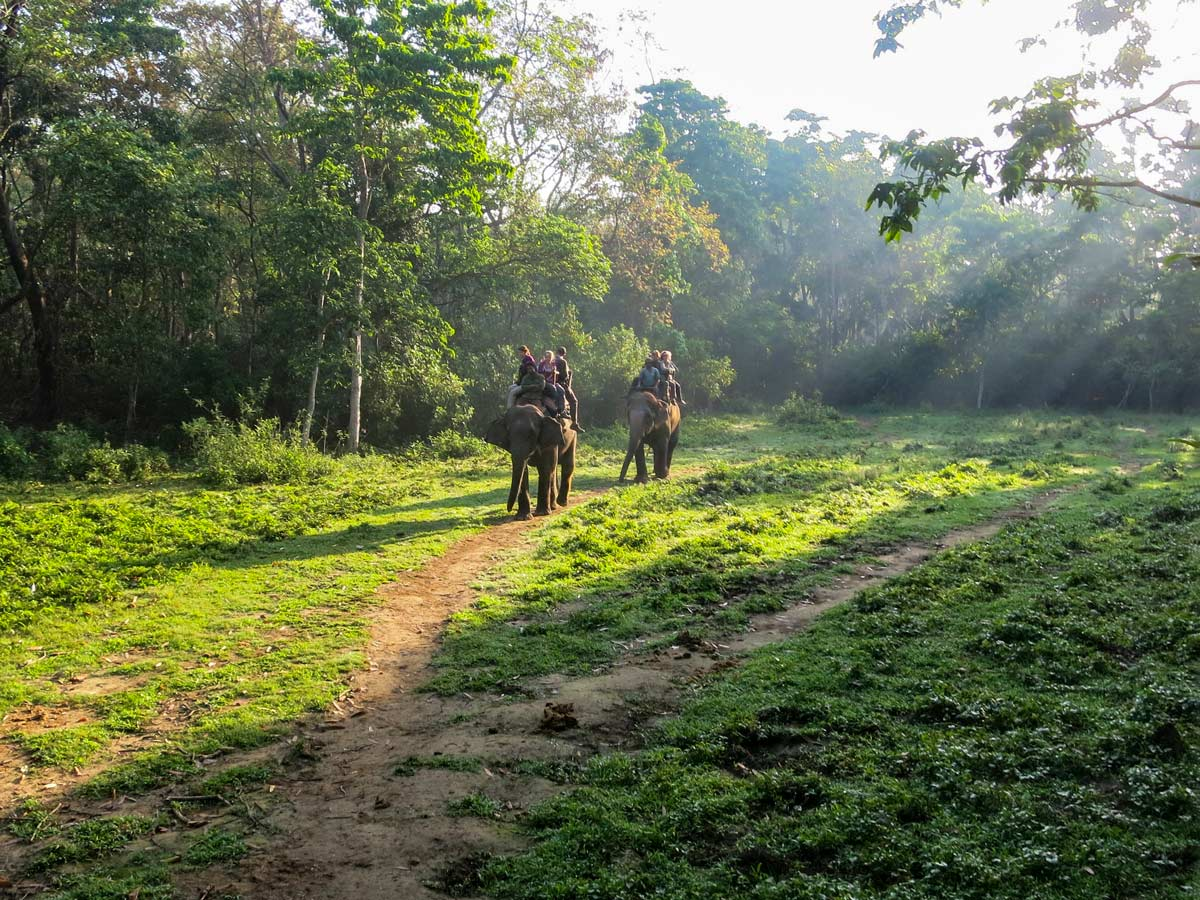 Elephant ride and safari wildlife viewing in Chitwan National Park Nepal