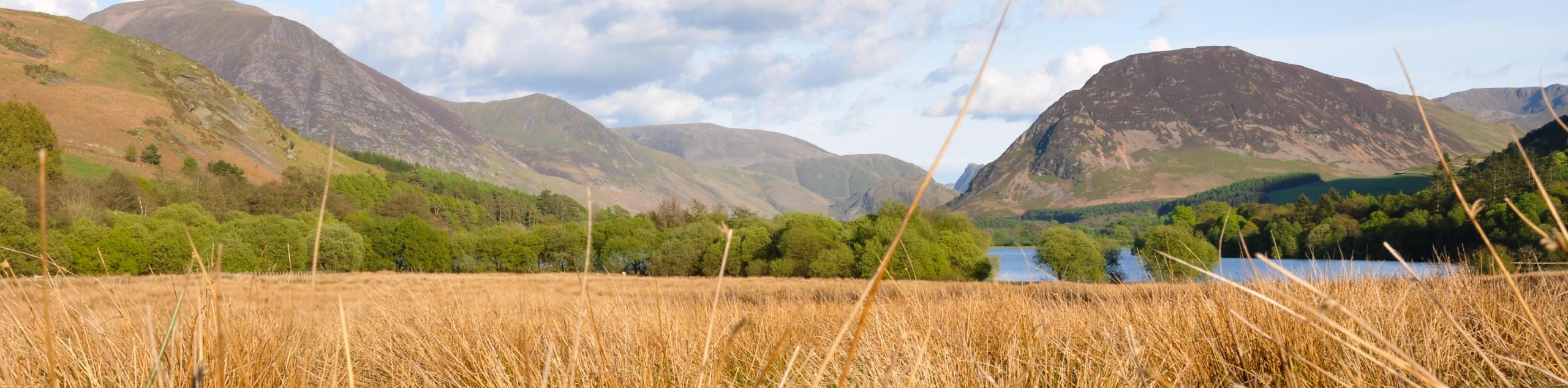 Loweswater and Holme Wood Walk