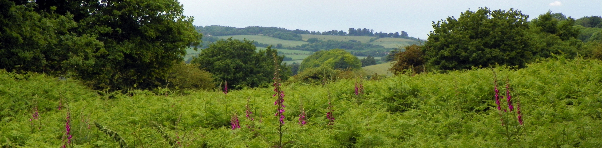 Castle Village and Berkhamsted Common Walk