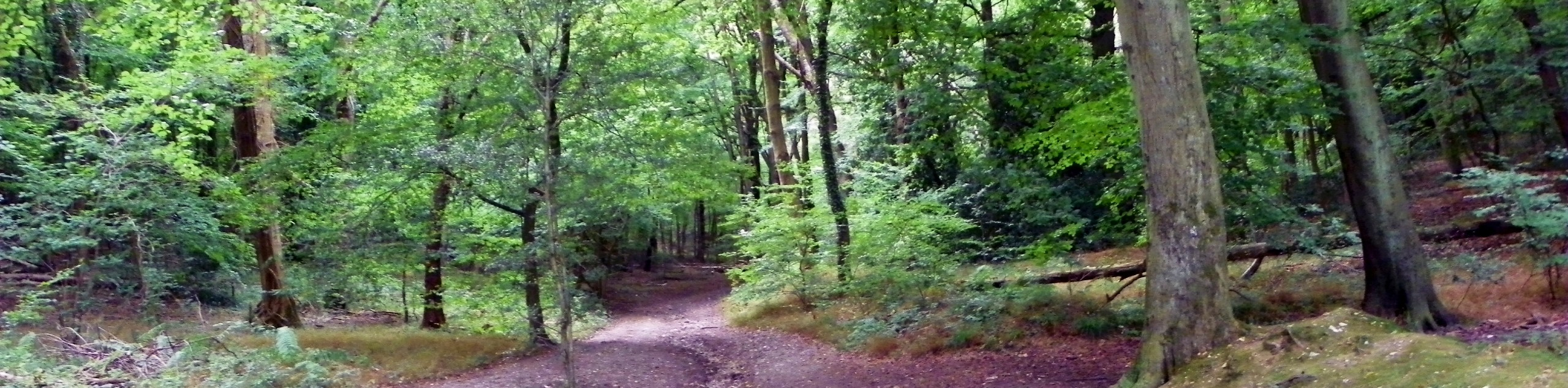 West Wycombe Woods Circular