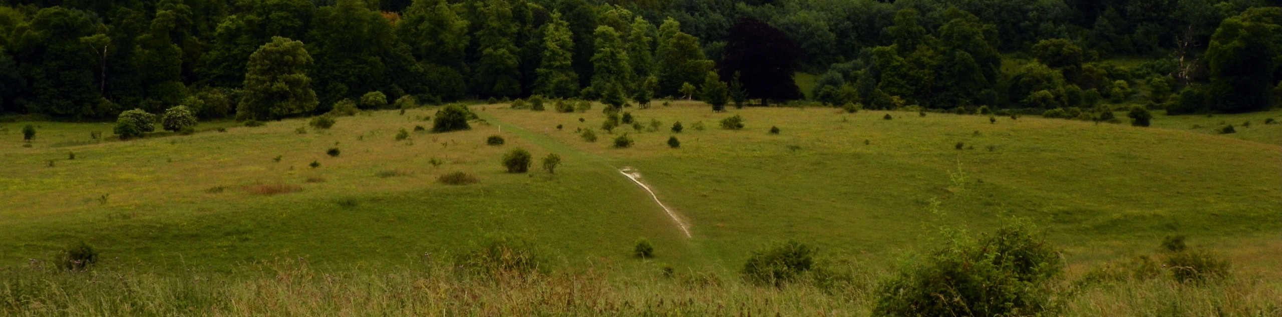 Wendover to Tring Park Walk