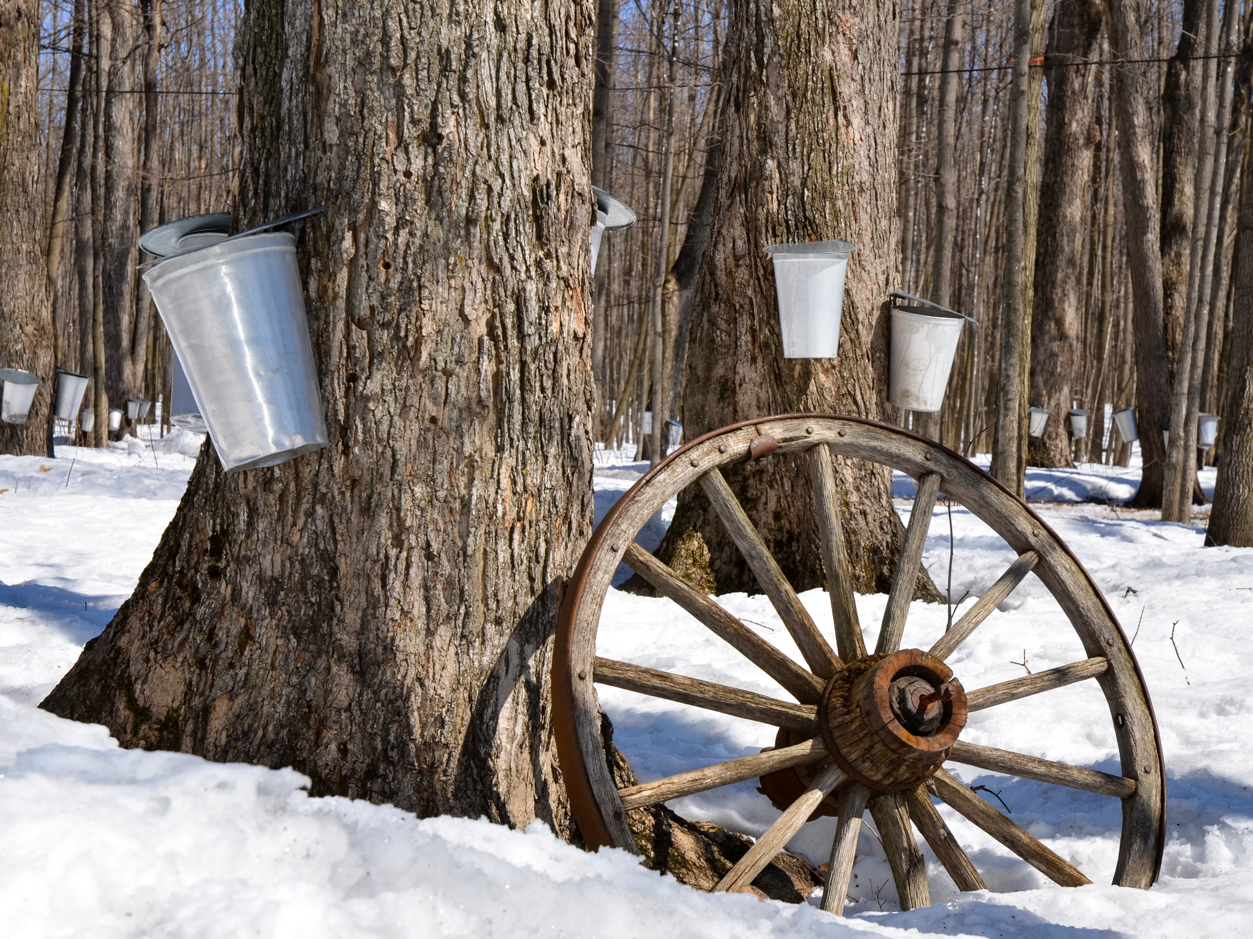 Sugar Shack Quebec traditional maple syrup making