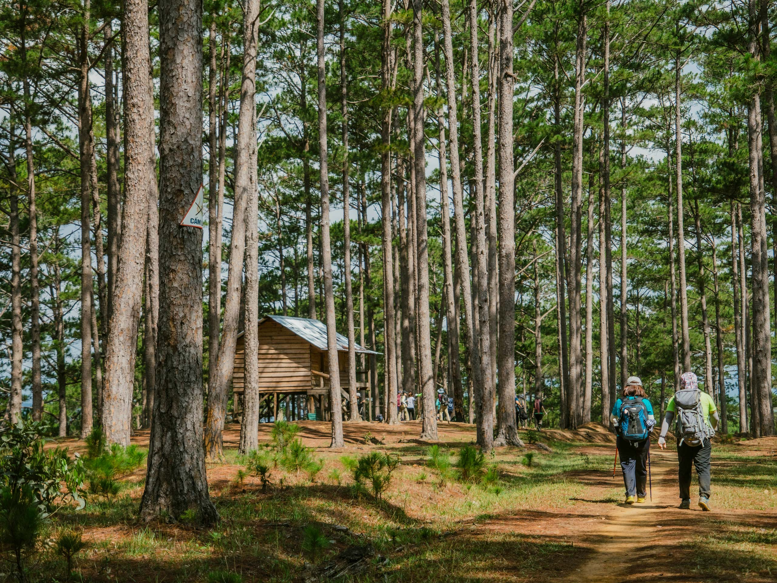 Couple with backpacks walking through the forest toward cabin