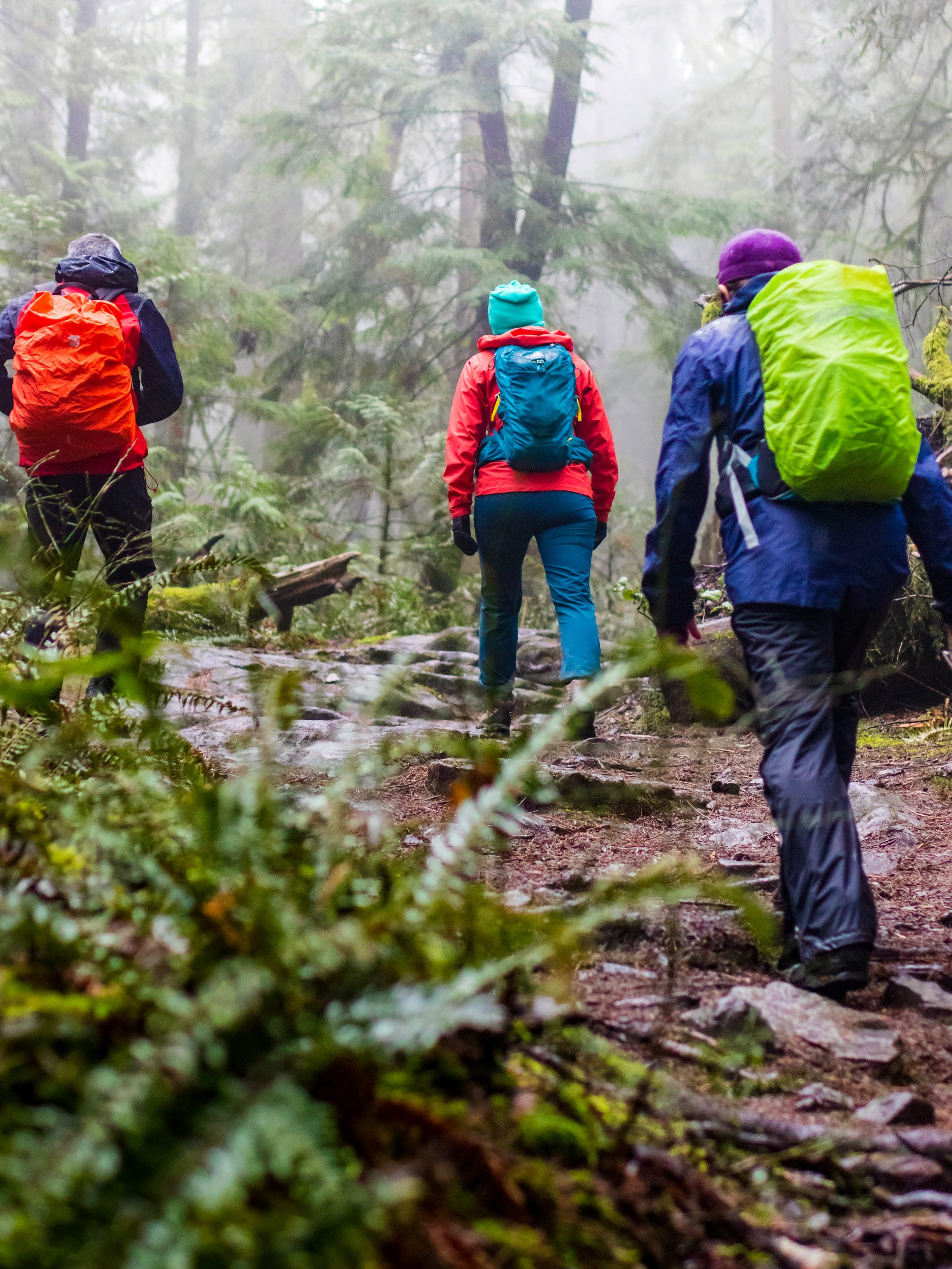 Trekking group backpackers walking through misty foggy forest